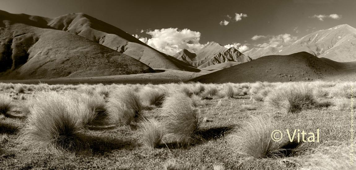 Tussocks and Snow Grass on the Lindis Pass Highway. Central Otago Landscape Images.