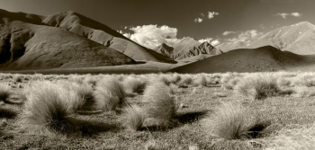 Tussocks_and_Snow_Grass_on_the_Lindis_Pass_Highway_Central_Otago_Landscape_Images