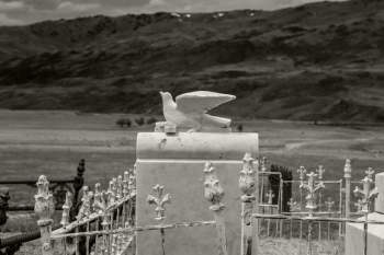 Snow_White_Turtle_Dove_on_Marble_Gravestone_in_the_Nevis_Valley_Central_Otago