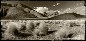 Snow_Tussock_in_the_Lindis_Pass_Central_Otago_Southern_Lakes___