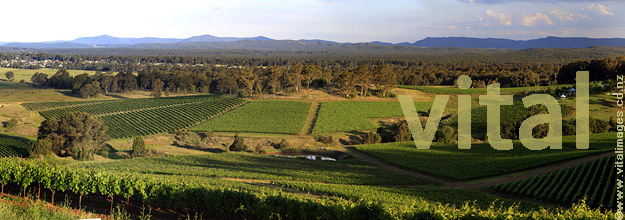 Vineyard patchwork above Cessnock Hunter Valley NSW Australia