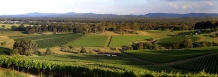 Vineyard_patchwork_above_Cessnock_Hunter_Valley_NSW_Australia