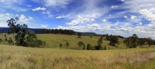 Rural_New_South_Wales_Beef_Cattle_grazing_in_the_Hunter_Valley_near_Cessnock_NSW_Australia