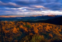 First_sunlight_on_tussock_grass_and_spaniard_plant_on_Mt_Grandview_with_Wanaka_basin_in_the_background