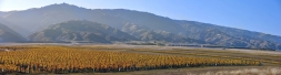 Photos_Images_of_Central_Otago_Vineyards_Pinot_Noir_Vines_Grapes_Wine_Winery