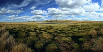 _Photo_of_Natural_raised_bog_wetland_in_the_Serpentine_historic_reserve_near_the_Old_Dunstan_trail_Central_Otago_New_Zealand