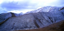 Texture_of_Snow_and_tall_red_tussocks_on_rolling_hills_near_the_Lindis_Pass_in_winter